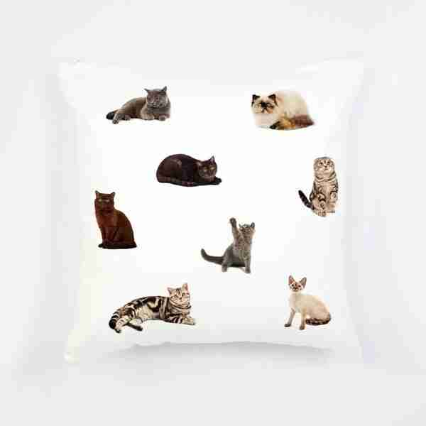 Cat Collection Cushion with Insert by Club of Odd Volumes