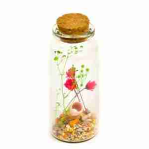 Message in a Bottle Gift - Roses